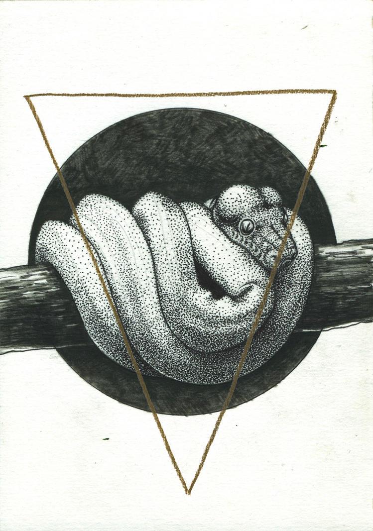 Snail by Pallala