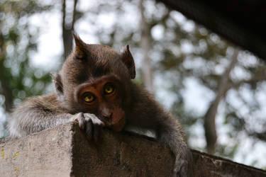 A Balinese Monkey by Pivsle