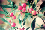 Pinkberry Green