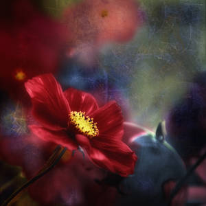A flower called Alice