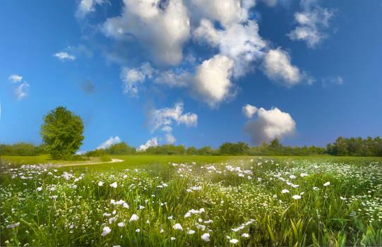 fields of white