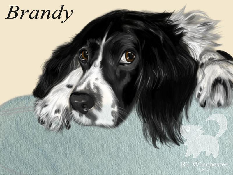wounding dog brandy morace - 800×601