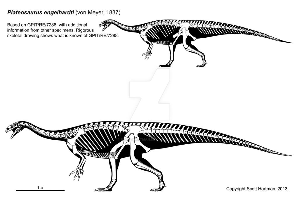 Plateosaurus engelhardti by ScottHartman