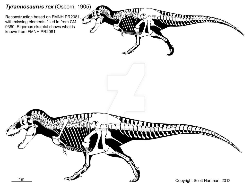 a_t__rex_named_sue_3_0_by_scotthartman-d21wpi8.jpg