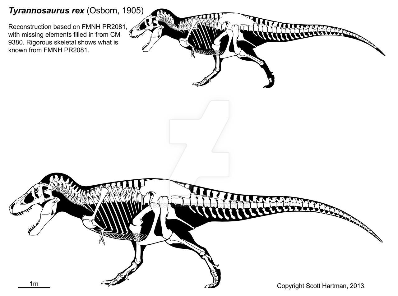 A T. rex named Sue 3.0