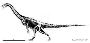 Basal therizinosaur