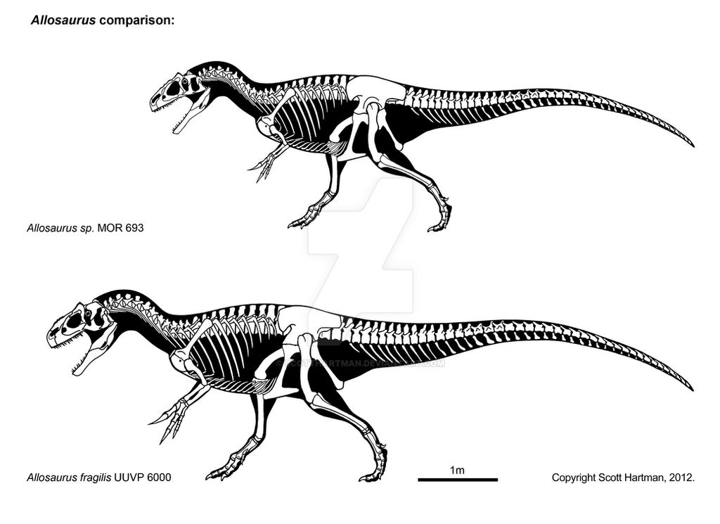 Allosaur comparison by ScottHartman