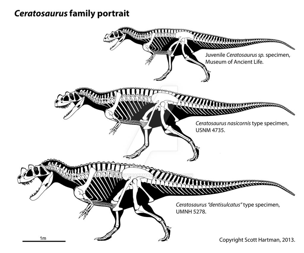 Ceratosaurus growth series by ScottHartman