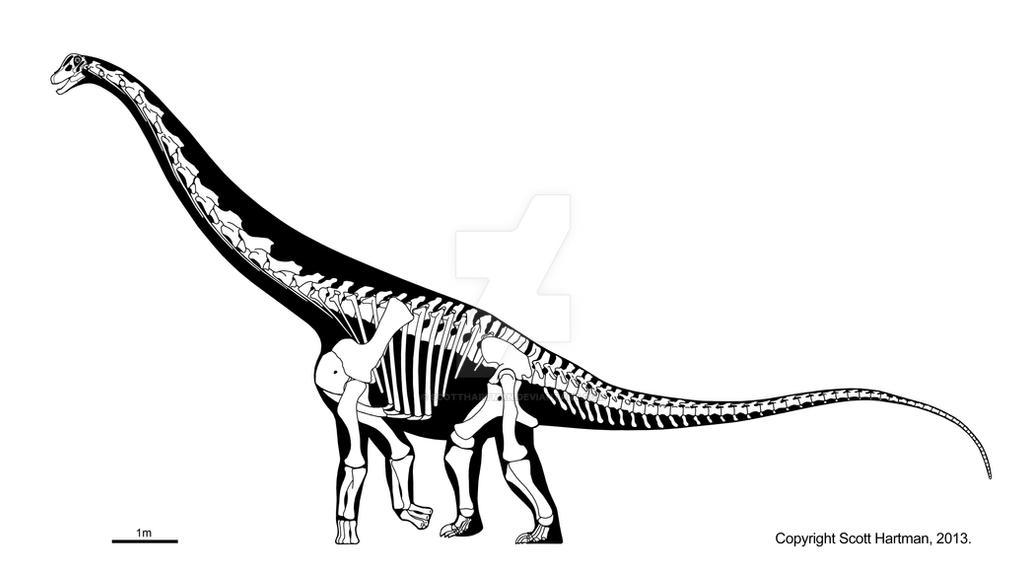 Remember the (subadult) Alamosaurus by ScottHartman