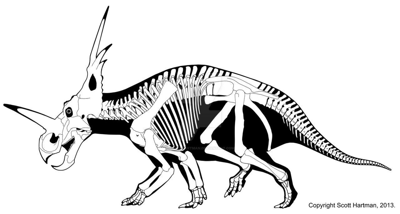 HD wallpapers coloring pages anatomy free