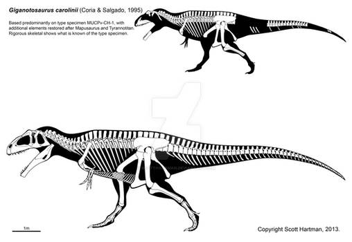 Big honkin' theropod of the southern hemisphere