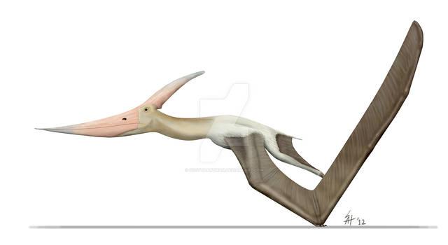 Pteranodon takes flight