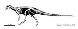 The quintessential hypsilophodont