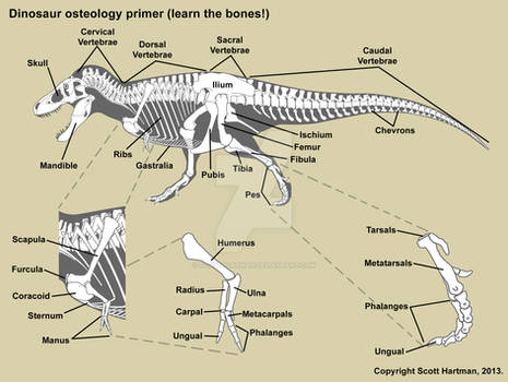 The leg bone is connected to the...