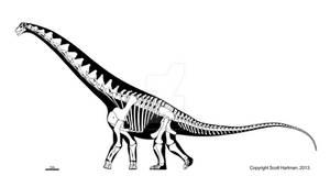 Remember the (adult) Alamosaurus