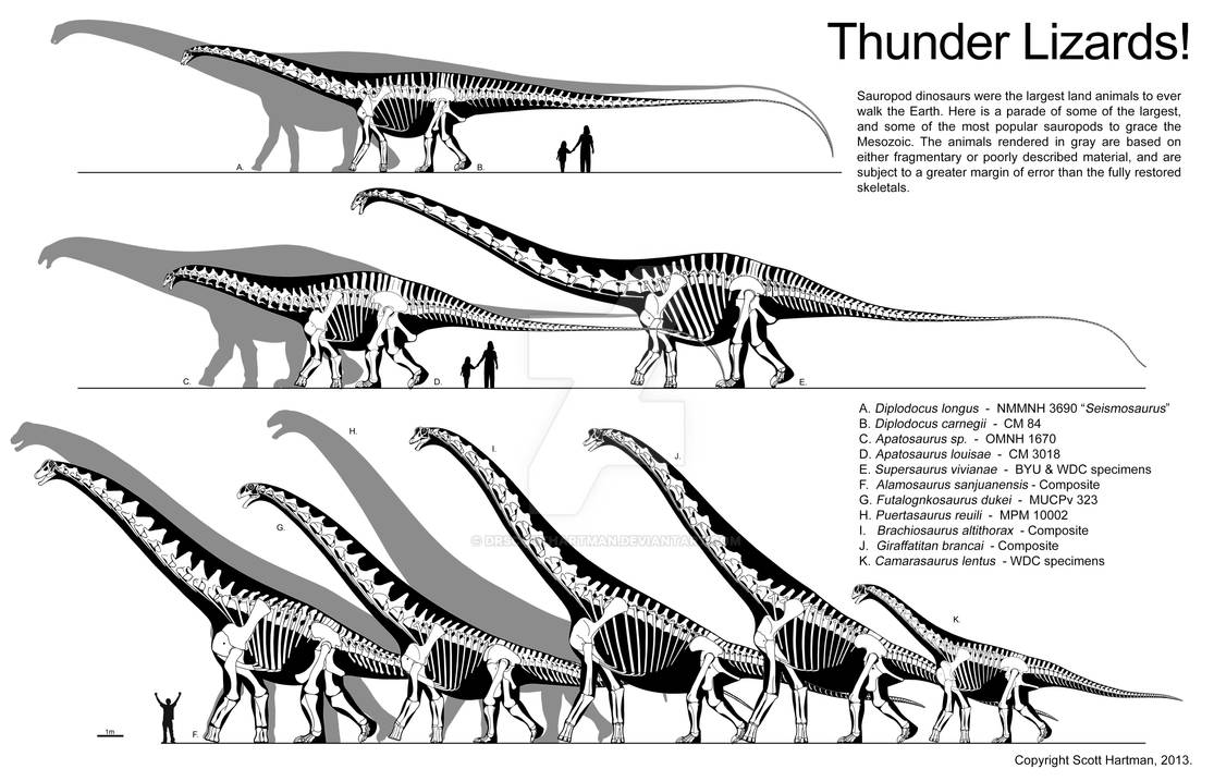 Thunder Lizard size comparison