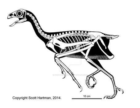 Sapeornis - a weird Early Cretaceous non-oviraptor