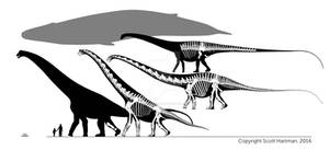 Sauropod-whale face off