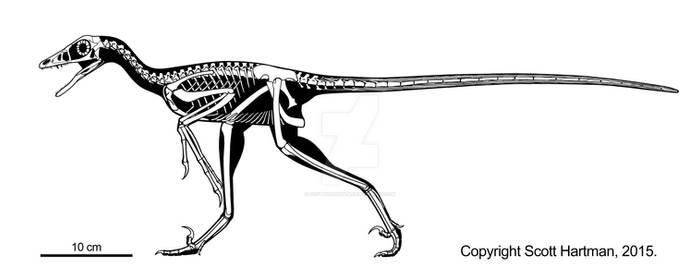 Microraptor returns