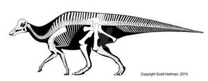 Hypacrosaurus stebingeri