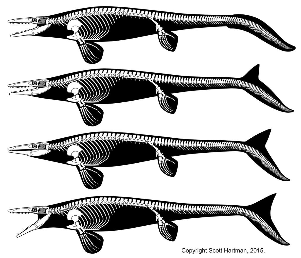 Tylosaurus - teach the controversey web resolution by ScottHartman