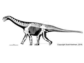 Shunosaurus, a primitive club-tailed sauropod