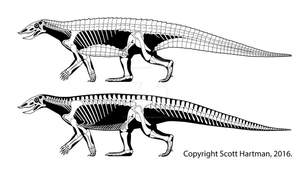 Finally, an aetosaur!