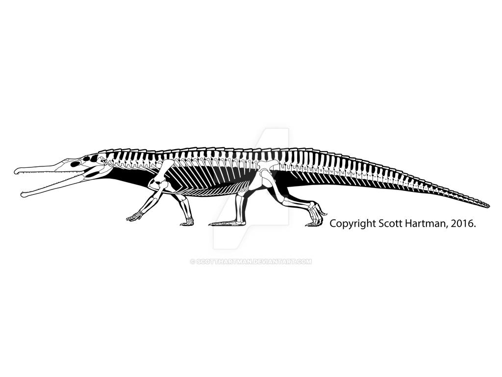 Paleorhinus - not a croc! by ScottHartman
