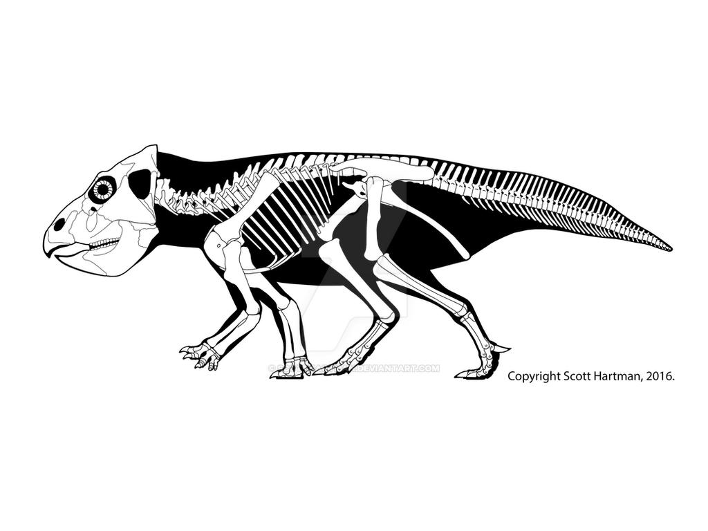 The not-so-gracile Leptoceratops by ScottHartman