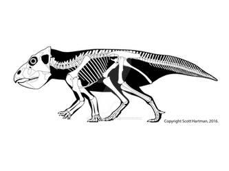 The not-so-gracile Leptoceratops
