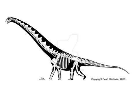 Dreadnoughtus - huge, but not the 'hugest'