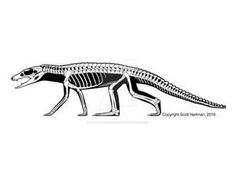 Araripesuchus tsangatsangana