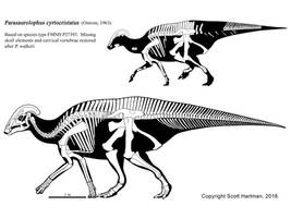 Short-Crested Parasaurolophus by ScottHartman