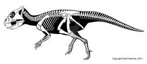 Primitive Chinese Ceratopsian