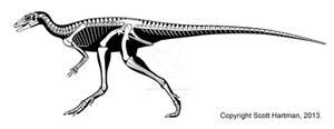 Eocursor, a basal ornithiscian