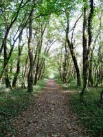 chemin forestier by FabienBertham