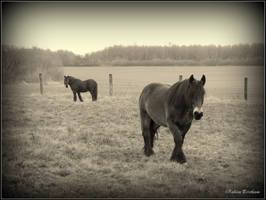 two horses ... by FabienBertham