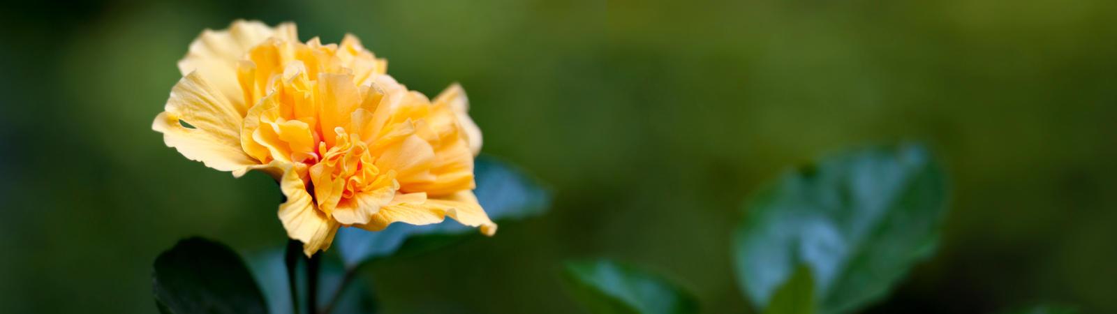 Yellow Flower by Bathlamos