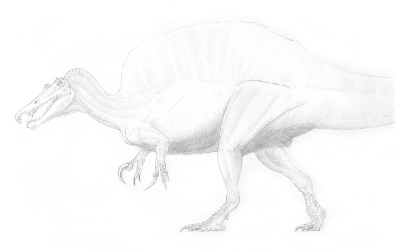 How To Draw Spinosaurus