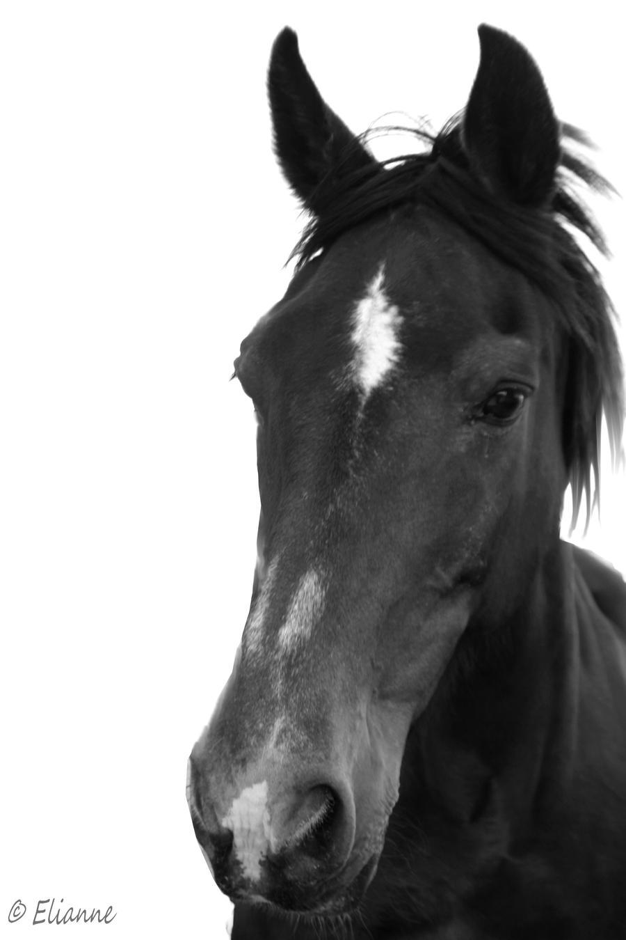 horse black and white by eliannne on deviantart. Black Bedroom Furniture Sets. Home Design Ideas