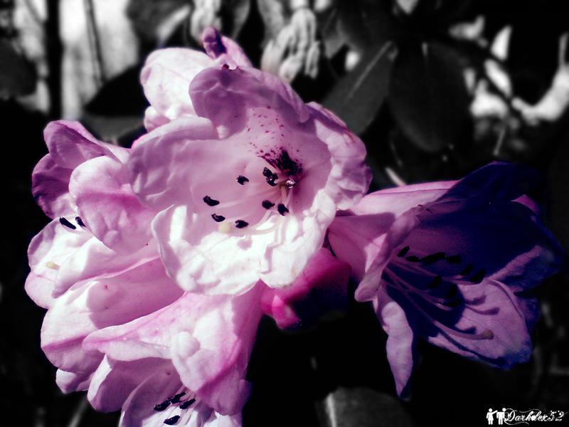 Botanic Attack IV by darkdex52