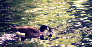 Pond Half Nothing, Pond Half Full by darkdex52