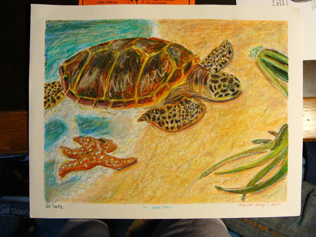 Sea Turtle by the-bumble-bee-one