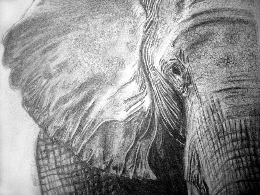 Elephant Drawing Wallpaper 26741