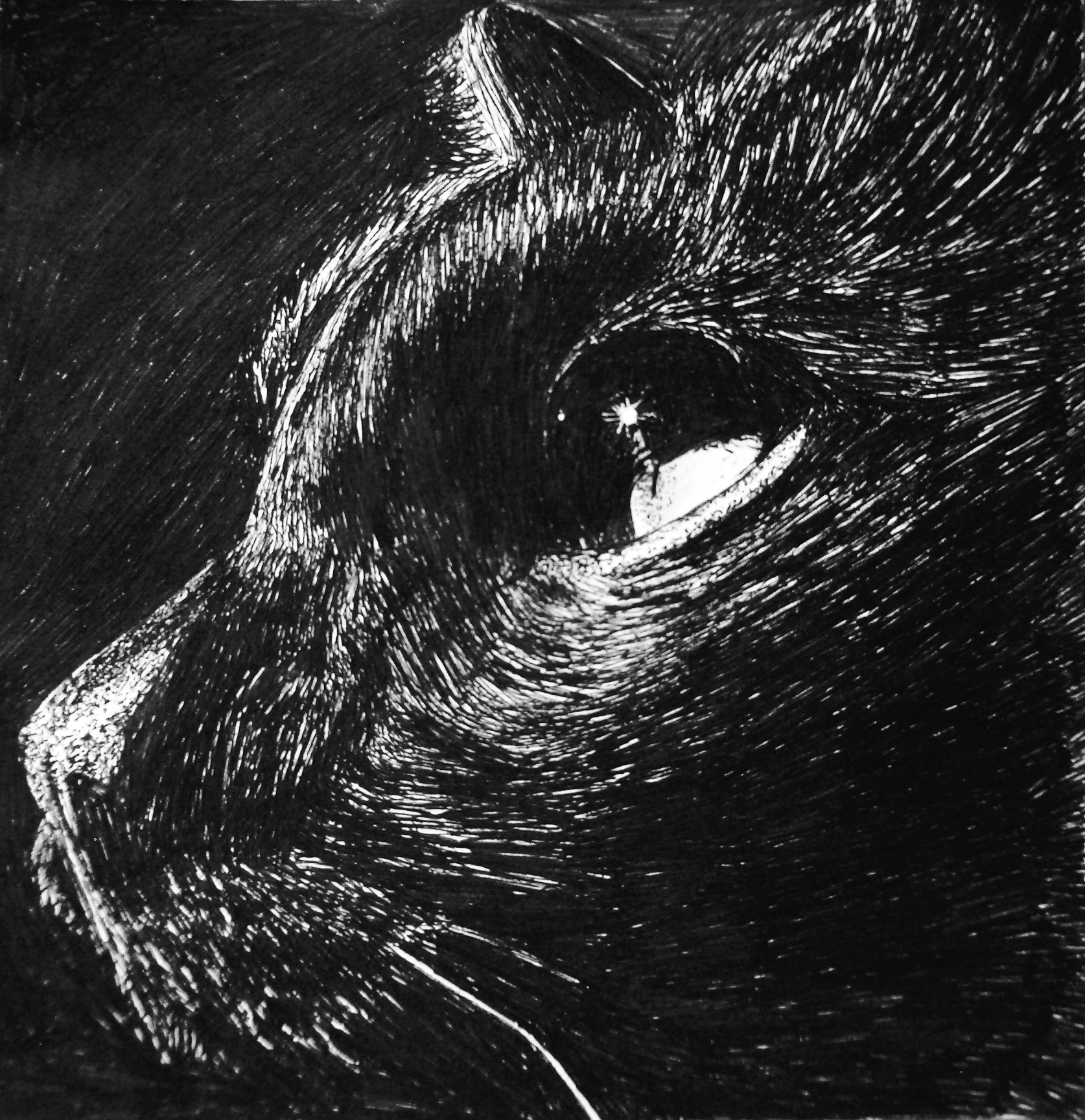 Black Cat by Bolbec