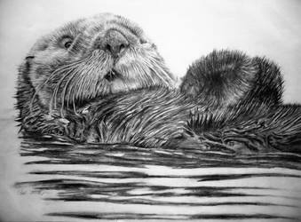 Otter by Bolbec