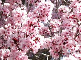 Springtime in Albuquerque by OhHeyItsSammi