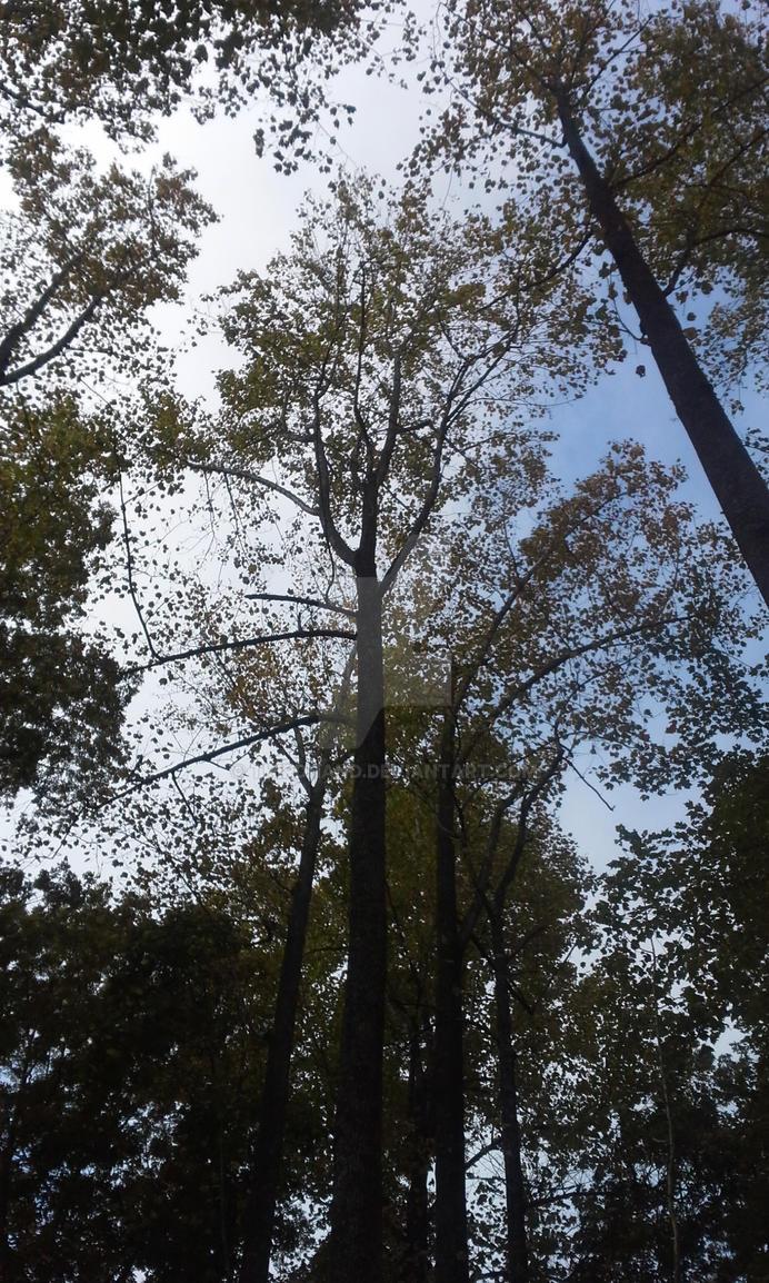 autumn uplook by thirdhand