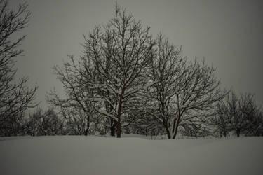 Snow by matcheslv