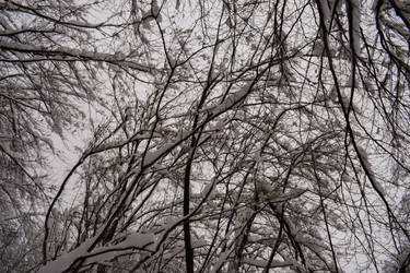 Snow on the branches by matcheslv